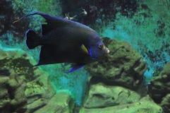 Bellezza del mondo subacqueo fotografia stock