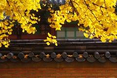 Bellezza del palazzo Fotografia Stock