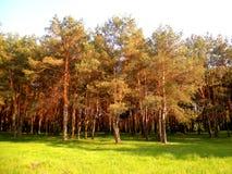 Bellezza del terreno boscoso fotografie stock libere da diritti