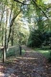 Bellezza del terreno boscoso dell'abbazia di Westminster Immagine Stock