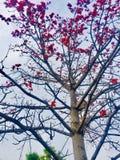 Bellezza dell'albero dei fiori dei season's di estate e della primavera Fotografie Stock