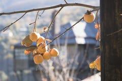 Bellezza dell'autunno Fotografia Stock Libera da Diritti