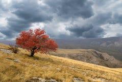 Bellezza dell'autunno immagini stock libere da diritti