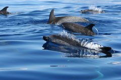 Bellezza dell'oceano Fotografia Stock