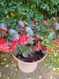 Bellezza della casa del giardino di fiori Fotografia Stock Libera da Diritti
