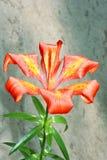 Bellezza della flora Fotografia Stock Libera da Diritti