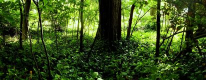 Bellezza della foresta Fotografia Stock Libera da Diritti