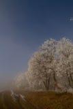 Bellezza della natura Fotografie Stock Libere da Diritti