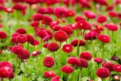 Bellezza della natura in Asiya Immagine Stock