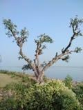 bellezza della natura un bello albero Immagine Stock
