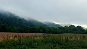 Bellezza della nebbia Fotografia Stock Libera da Diritti