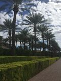 Bellezza della palma fotografie stock