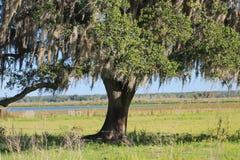 Bellezza della quercia fotografie stock libere da diritti