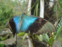 Bellezza delle ali lacerate Fotografie Stock