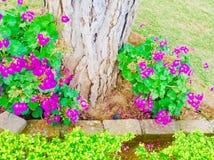 Bellezza delle piante dei fiori dei season's di estate e della primavera Immagine Stock