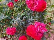 Bellezza delle piante dei fiori dei season's di estate e della primavera Fotografia Stock