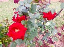 Bellezza delle piante dei fiori dei season's di estate e della primavera Fotografie Stock