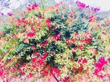 Bellezza delle piante del fiore dei season's di estate e della primavera Fotografia Stock