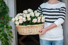 Bellezza delle rose Fotografie Stock