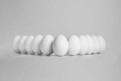 Bellezza delle uova Fotografie Stock