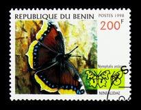Bellezza di Camberwell (antiopa) del Nymphalis, serie delle farfalle, circa Fotografie Stock Libere da Diritti