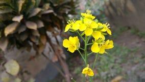 Bellezza di giallo fotografie stock libere da diritti