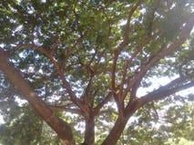 Bellezza di greenry Immagini Stock