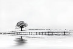 Bellezza di inverno dell'albero di quercia immagini stock
