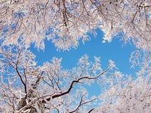 Bellezza di inverno di frattale Immagini Stock Libere da Diritti