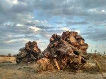 bellezza di legno Fotografia Stock