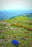 Bellezza di molla delle montagne Immagine Stock