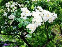Bellezza di nature& x27; s Immagini Stock