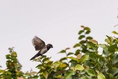 Bellezza di piccolo uccello Immagini Stock Libere da Diritti