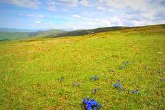 Bellezza di prato della primavera Fotografie Stock