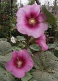 Bellezza floreale fotografie stock libere da diritti