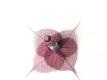Bellezza fragile 1 Immagine Stock Libera da Diritti