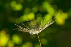 Bellezza impercettibile in natura Tenerezza in natura immagini stock