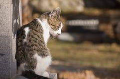 Bellezza ineguagliata di un gatto Immagine Stock