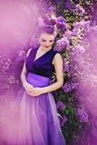Bellezza lilla Fotografie Stock