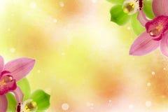 Bellezza luminosa del fondo della molla di colore del fiore dell'orchidea Fotografia Stock Libera da Diritti