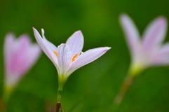 Bellezza in natura Immagini Stock