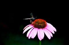 Bellezza in natura Fotografie Stock Libere da Diritti