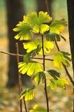 Bellezza in natura Immagine Stock