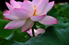 Bellezza in natura Immagini Stock Libere da Diritti