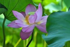 Bellezza in natura Fotografia Stock