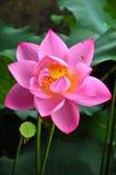Bellezza in natura Fotografie Stock