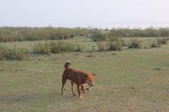 Bellezza naturale dell'isola di Monpura Immagine Stock