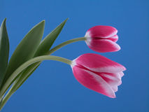 Bellezza nel colore rosa fotografia stock libera da diritti
