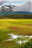 Bellezza, palude e montagne dell'Alaska Fotografia Stock Libera da Diritti