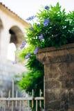 Bellezza piantata nel grande traliccio di glicine Fotografia Stock